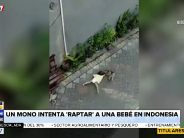 El vídeo surrealista en el que un mono subido a una moto intenta 'secuestrar' a un niño