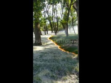 Las impactantes imágenes del pequeño incendio que avanza sobre las pelusas de los chopos