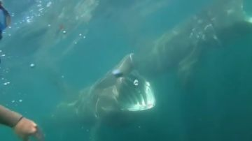 Tiburones en Irlanda