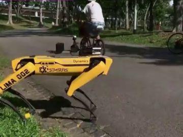 SPOT, el perro robot que vigila la distancia de seguridad