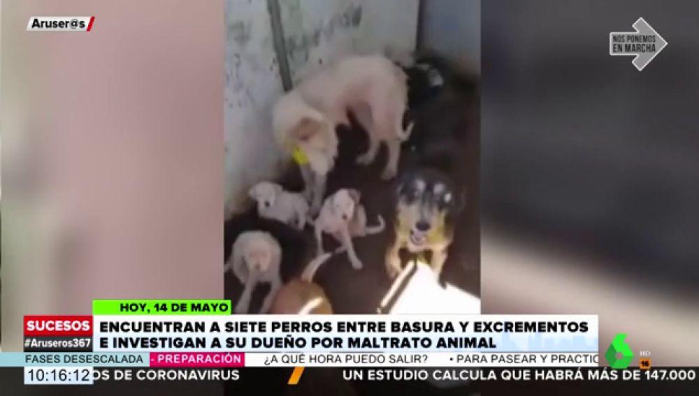 Encuentran a siete perros lesionados entre basura y excrementos en una caseta en La Rioja