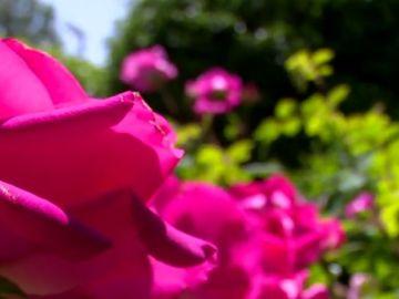 Imagen de archivo de una flor