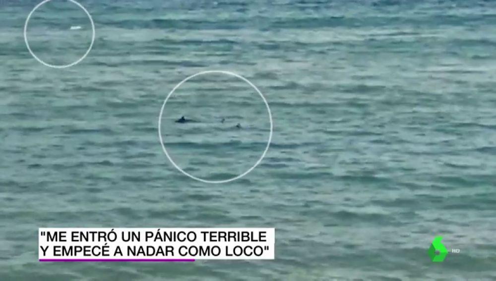 """Un nadador paralímpico huye de dos tiburones en una playa de Girona: """"Me entró un pánico terrible"""""""