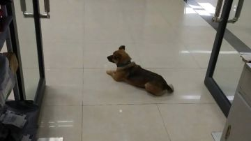 Xiaobao en la puerta del hospital