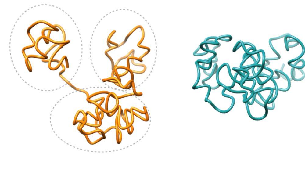 arquitectura de regiones del genoma