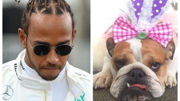 Lewis Hamilton y su perra Coco