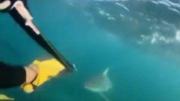 Un tiburón gigante aterroriza a dos buceadores adolescentes