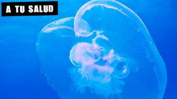 Imagen de archivo de una medusa