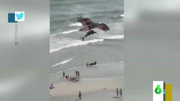 El impactante vídeo en el que un águila atrapa a un tiburón entre sus garras y se lo lleva volando