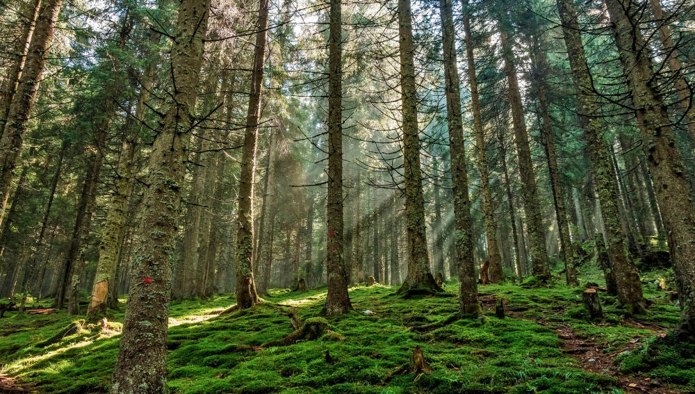 Los satelites detectan un brusco aumento de la explotacion forestal en Europa