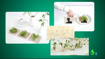 El emotivo gesto de Soraya Arnelas con el medio ambiente: un disco ecológico con algodón reciclado y semillas