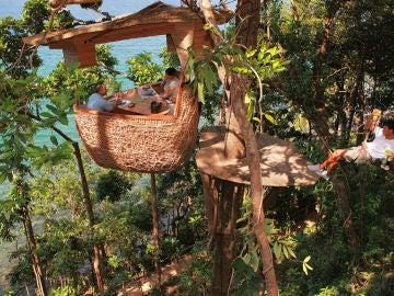 Koh Kood Tree Pods