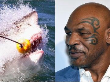 Mike Tyson competirá contra un tiburón en un programa de televisión