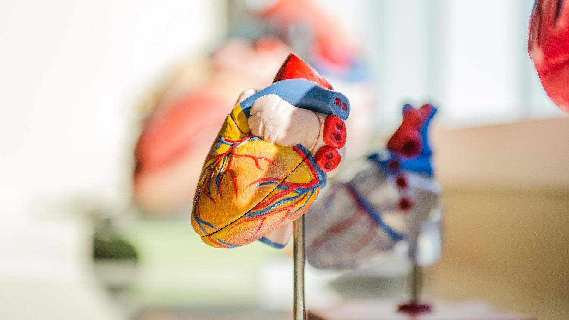 Los movimientos de contracción cardiaca influyen en la percepción del dolor