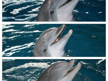 Los tres delfines del Zoo de Barcelona