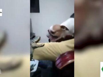 Día Mundial del Perro 2020: estos son los vídeos virales más divertidos de las redes