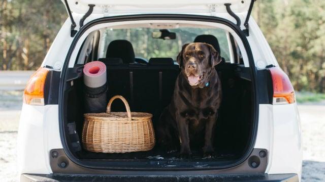 Viajar con mascotas en el coche: las multas a las que te enfrentas