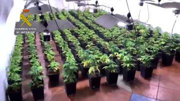 La marihuana era cultivada y recolectada en distintas plantaciones de la provincia de Granada