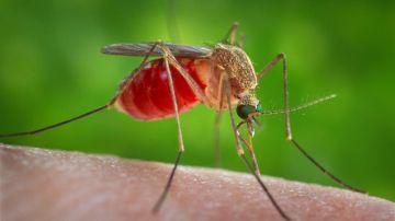 Meningoencefalitis vírica: qué es y cuáles son sus síntomas