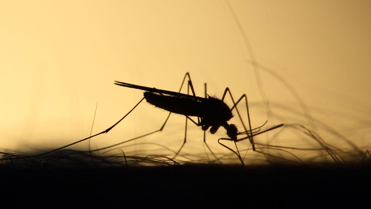 Virus del Nilo en Sevilla: estos son los mosquitos sospechosos de ...
