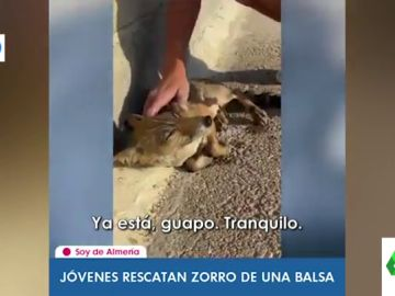 El momento en el que un joven rescata a un zorro de morir ahogado en Almería