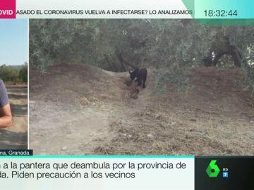 Difunden la primera fotografía de la pantera que deambula por la provincia de Granada