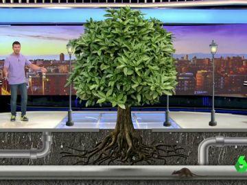 ¿Por qué se caen los árboles en las ciudades?
