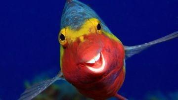 Un pez fotografiado por Arthur Telle Thiemann