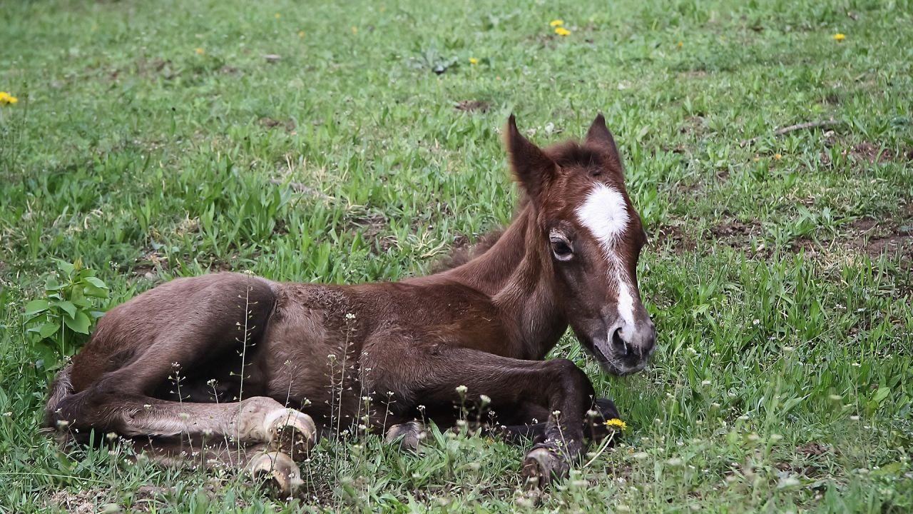 Imagen de archivo de un poni en el campo.