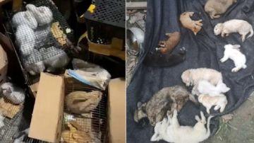 Imagen de las mascotas encontradas muertas en un almacén de China