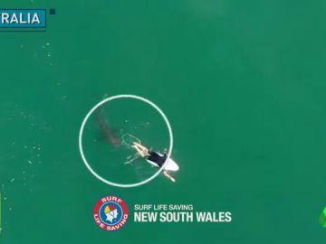 El terrorífico momento en el que un tiburón se acerca a centímetros de un surfista