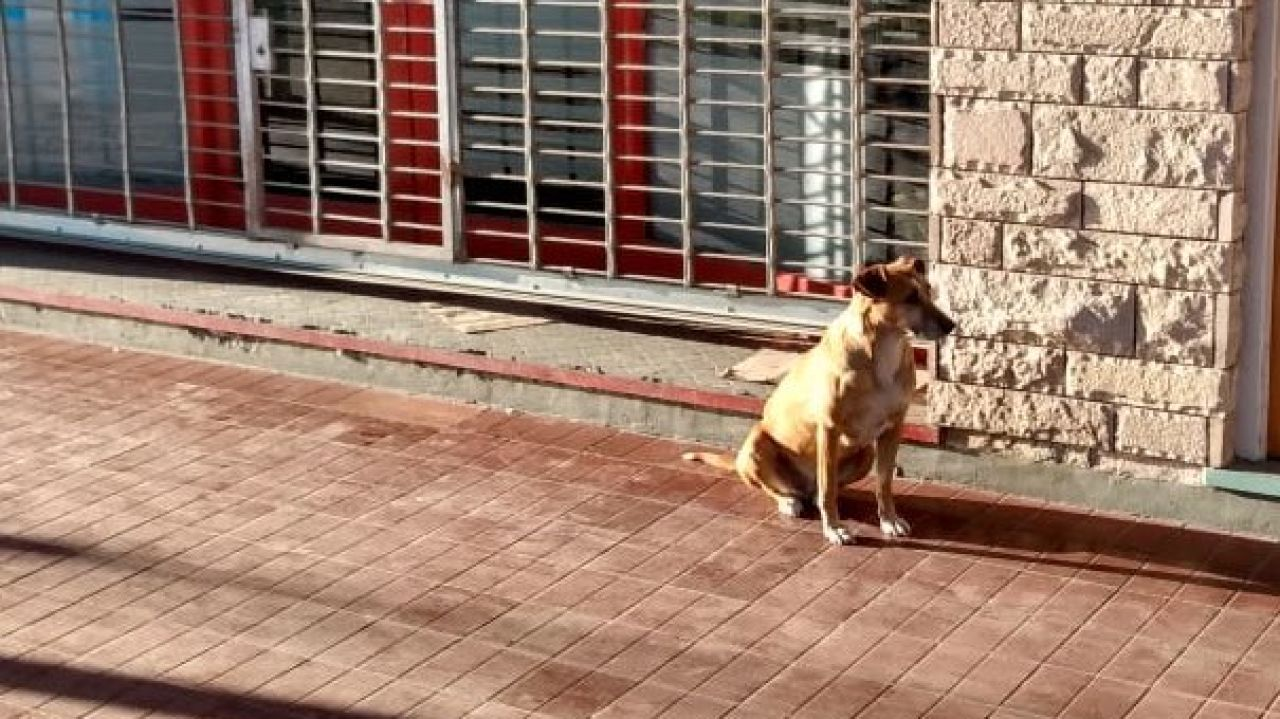 La perrita Bianca espera a su dueña, fallecida días antes, frente a su negocio