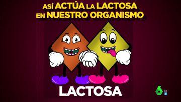 No, a la leche sin lactosa no le quitan la lactosa