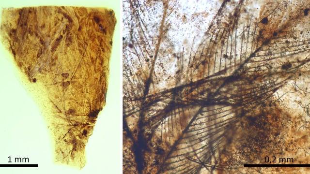 Hallan en Teruel los pelos de mamifero mas antiguos conservados en ambar