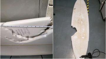 Mordedura de 17 pulgadas tras un ataque de tiburón en Hawáii
