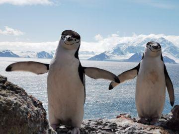 Pareja de pingüinos en la Antártida