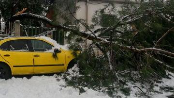 ¿Qué daños cubren los seguros ante un temporal como Filomena?