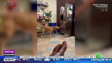 Graban a un perro sirviendo refrescos a su dueño y reciclando los envases