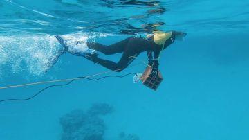 La contaminacion acustica perturba la vida en los oceanos