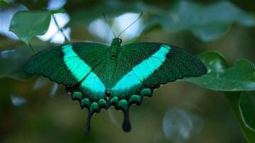 Proponen sistematizar los muestreos de insectos para comprender y evitar su desaparicion