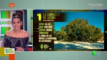 """Una encina española va ganando el """"Eurovisión de los árboles"""": así es el concurso 'Árbol Europeo del Año'"""