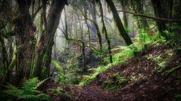 Los bosques europeos son cada vez mas vulnerables a los vientos incendios y plagas de insectos