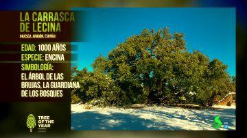 """La carrasca de Lecina, en Huesca, gana el """"Eurovisión de los árboles"""""""
