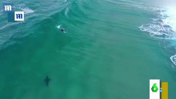 """Las impactantes imágenes del acecho de un tiburón blanco a un surfista que dejan """"con el corazón en un puño"""""""