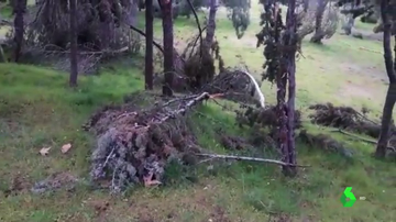 """El peligro de no retirar a tiempo los árboles afectados por Filomena: """"Hay zonas más predispuestas a arder el próximo verano"""""""