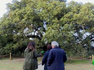 Lecina, la historia del pueblo de 13 habitantes con el árbol europeo del año