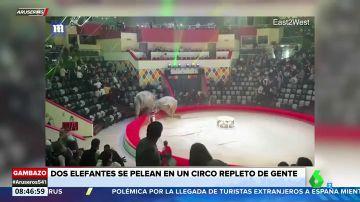 Dos elefantes se enfrentan en un show en el circo y desatan el pánico entre el público