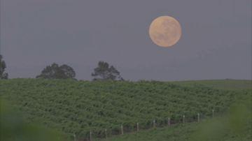 ¿Qué es la Luna de gusano y cómo podemos verla este fin de semana?