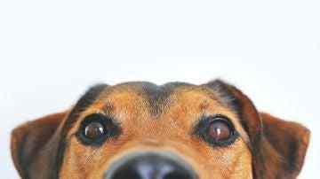 No es sexo: esto es lo que significa que tu perro monte insistentemente tu pierna