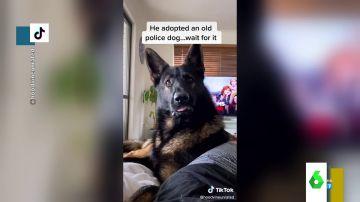 La divertida reacción de un perro al escuchar la palabra 'cocaína'